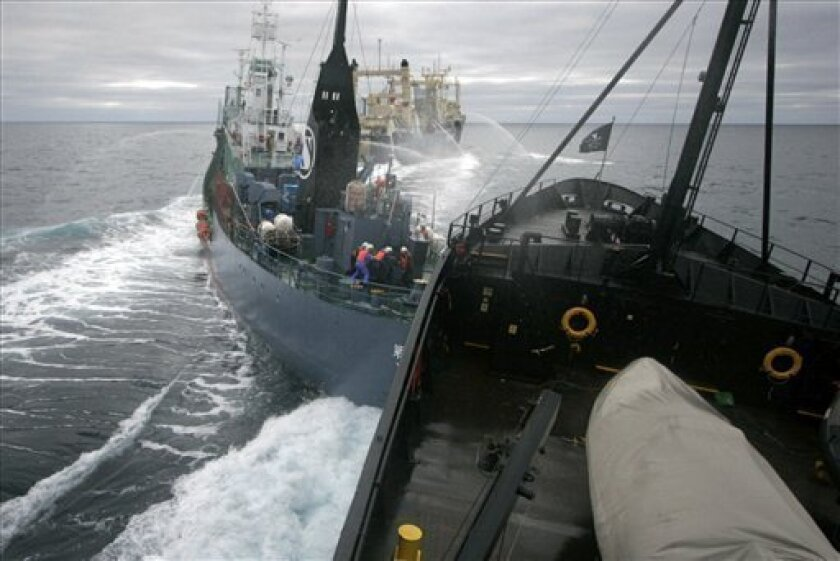 In this photo release by Sea Shepherd Conservation Society, Sea Shepherd's ship, the M/Y Steve Irwin collides with the stern of Japanese harpoon whaling ship, the Yushin Maru No. 2 while factory ship the Nisshin Maru, background, processes a newly caught minke whale in the Ross Sea, Antarctic Sea, early Friday, Feb. 6, 2009. Sea Shepherd claimed that the harpoon vessel moved in to block the Steve Irwin's attempt to prevent the transfer of a dead whale up the slipway of the Nisshin Maru. (AP Photo/Sea Shepherd Conservation Society, Adam Lau)