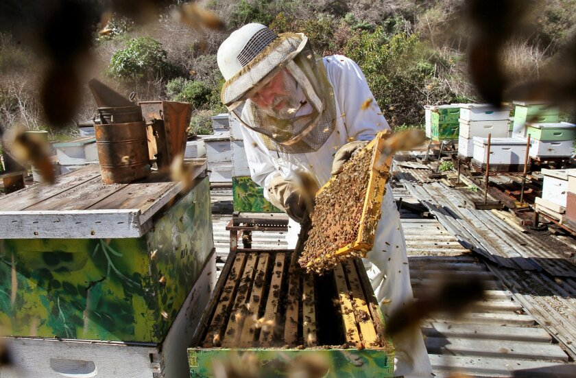 Brother Blaise Heuke, a Benedictine monk at Oceanside's Prince of Peace Abbey, checks a frame of one of his many beehives he's had there for over 40 years.