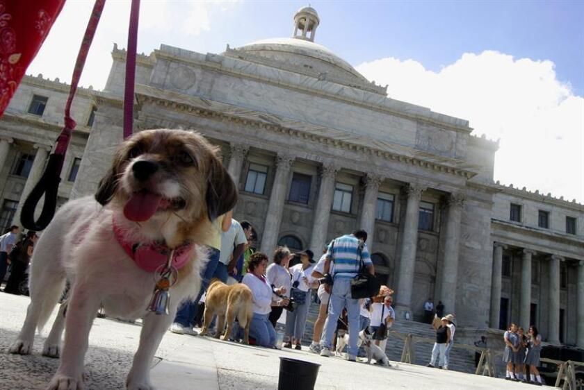 Varias mascotas pasean con sus familias frente al Congreso de Puerto Rico. EFE/Archivo