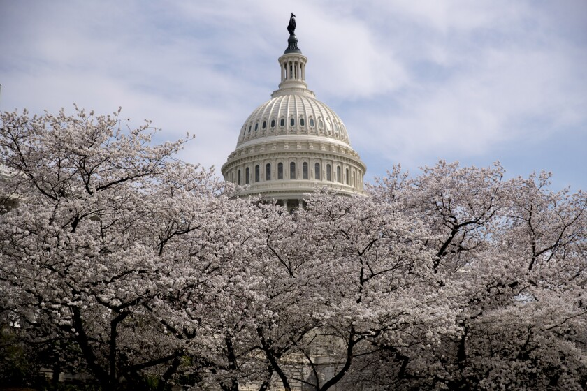 "FILE - In this March 30, 2019, file photo the Dome of the U.S. Capitol Building is visible as cherry blossom trees bloom on the West Lawn in Washington. Washington health officials recommended on Wednesday, March 11, 2020, that all ""non-essential mass gatherings, including conferences and conventions,"" be postponed or canceled through the end of March, a move that could imperil the popular Cherry Blossom Festival. (AP Photo/Andrew Harnik)"