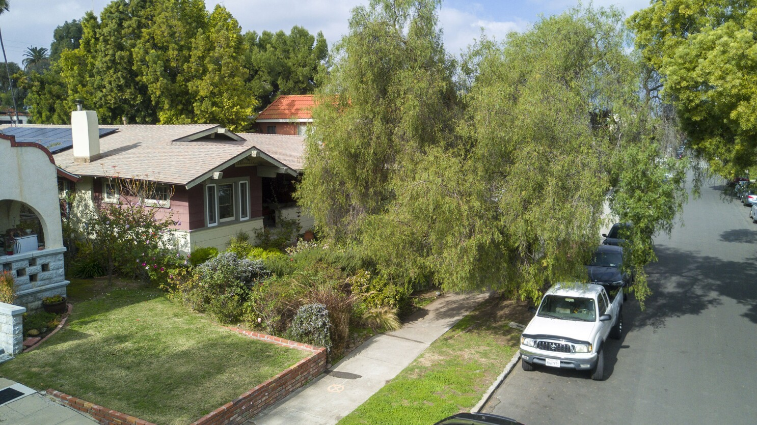 A tree grows — and grows — in San Diego. Is this a problem?
