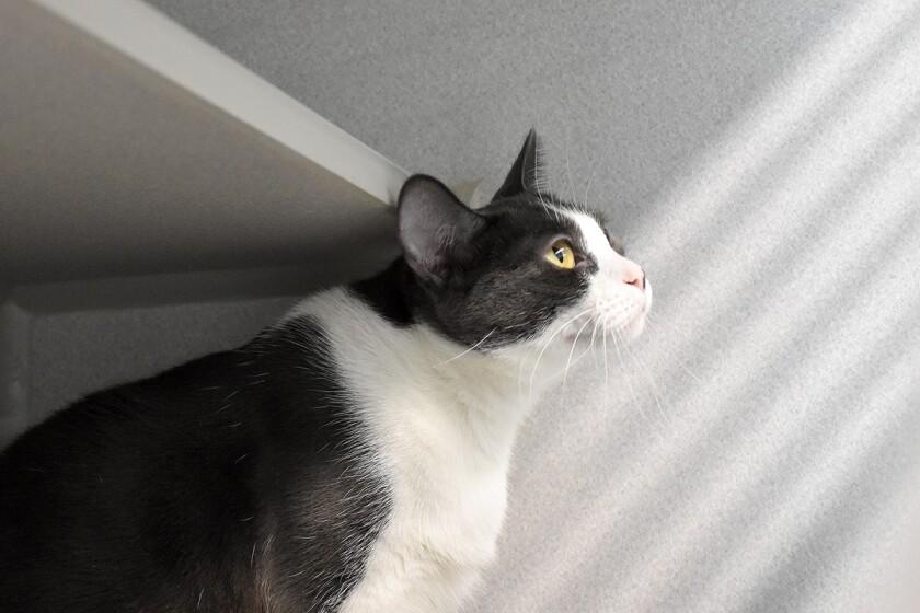 Macadamia, 2-year-old female cat.