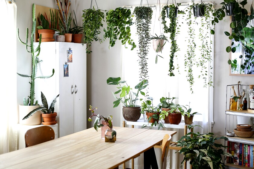 Plants adorn Danae Horst's kitchen.