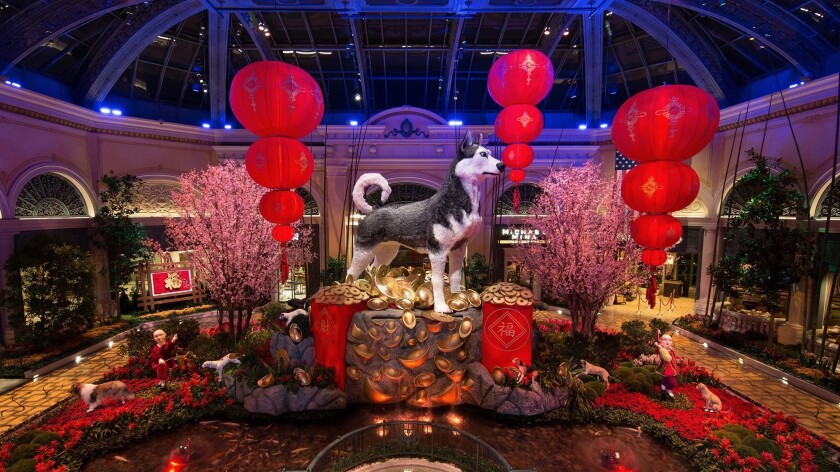 Dragons and dogs take over Las Vegas for Chinese New Year ...