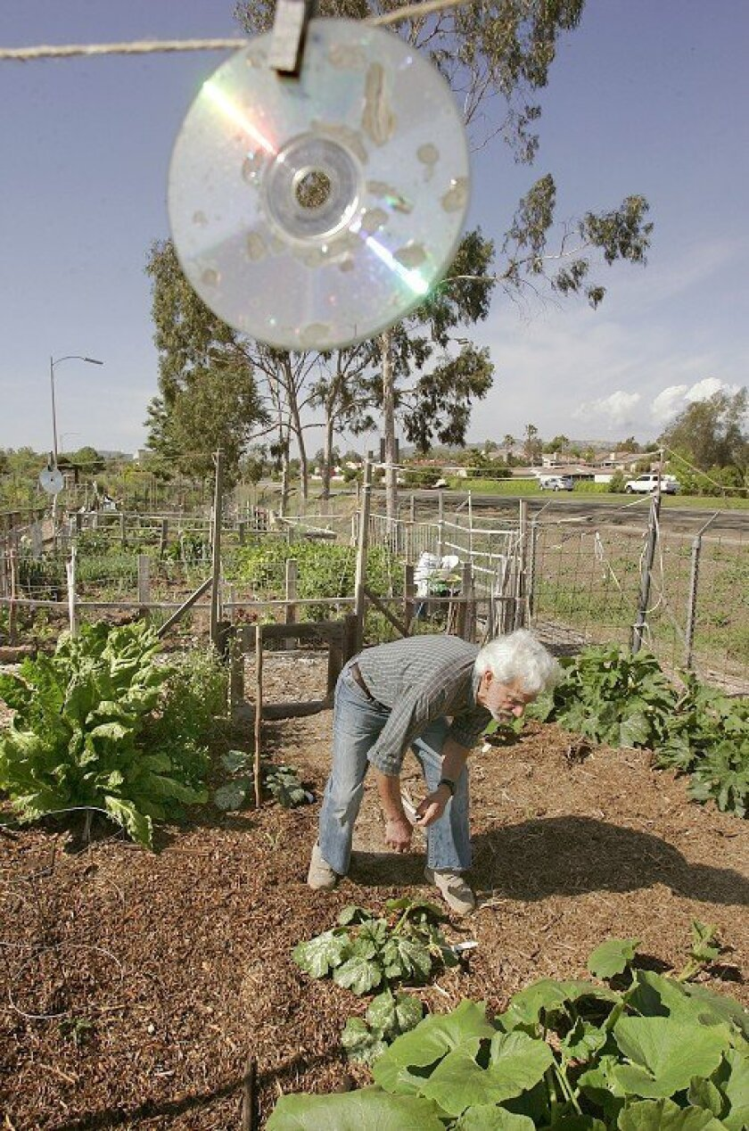 Corbet Harrison tends to his plants at his plot at the Escondido Senior Garden. A CD hangs above his garden to keep birds away. He hasn't decided whether it's effective.