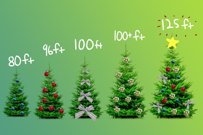 Decorated Christmas trees of varying heights