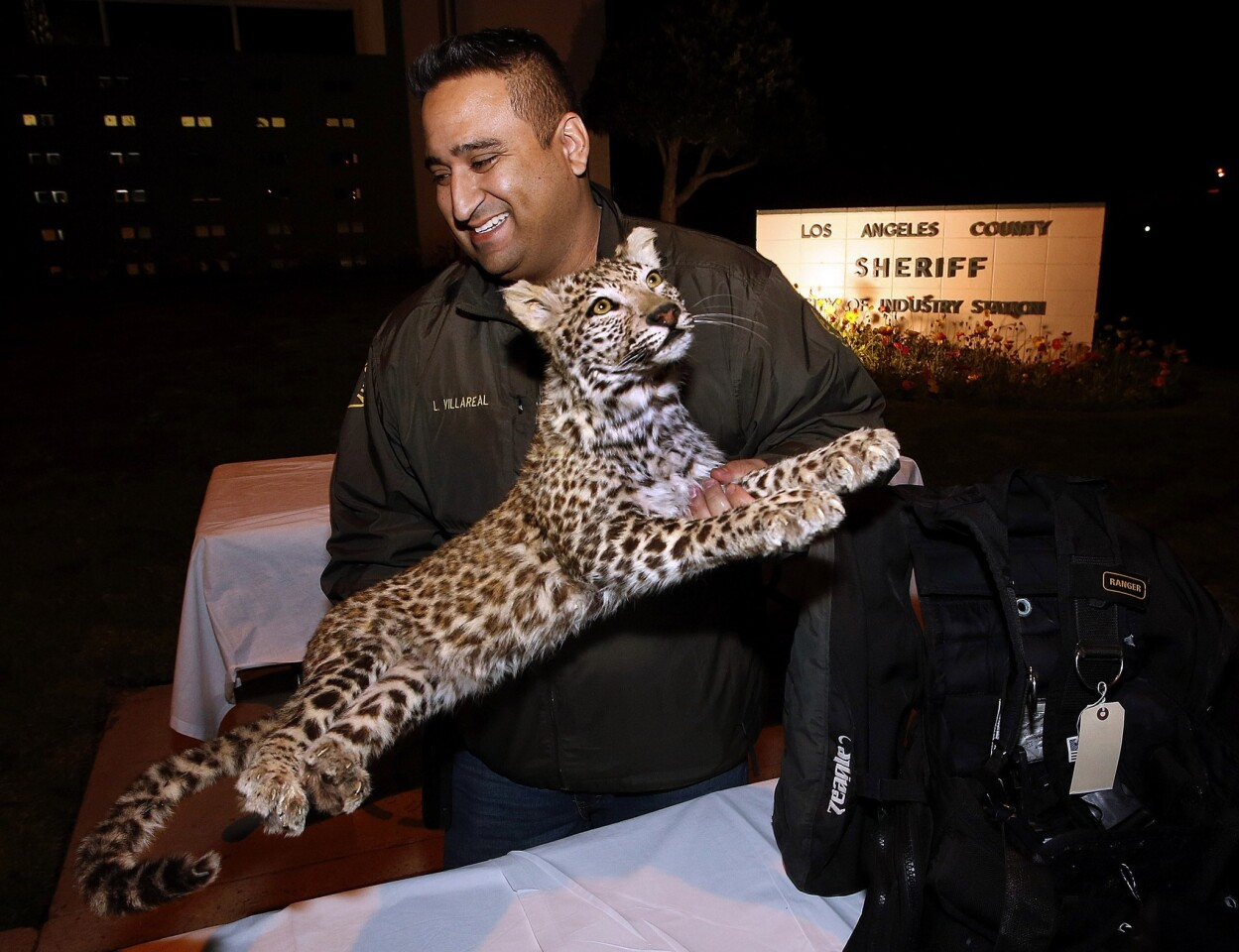 Industry Sheriff's Det. Larry Villareal carries the mounted snow leopard back to the evidence locker after it was put on display for the media along with other items stolen from a home in La Habra Heights in November.
