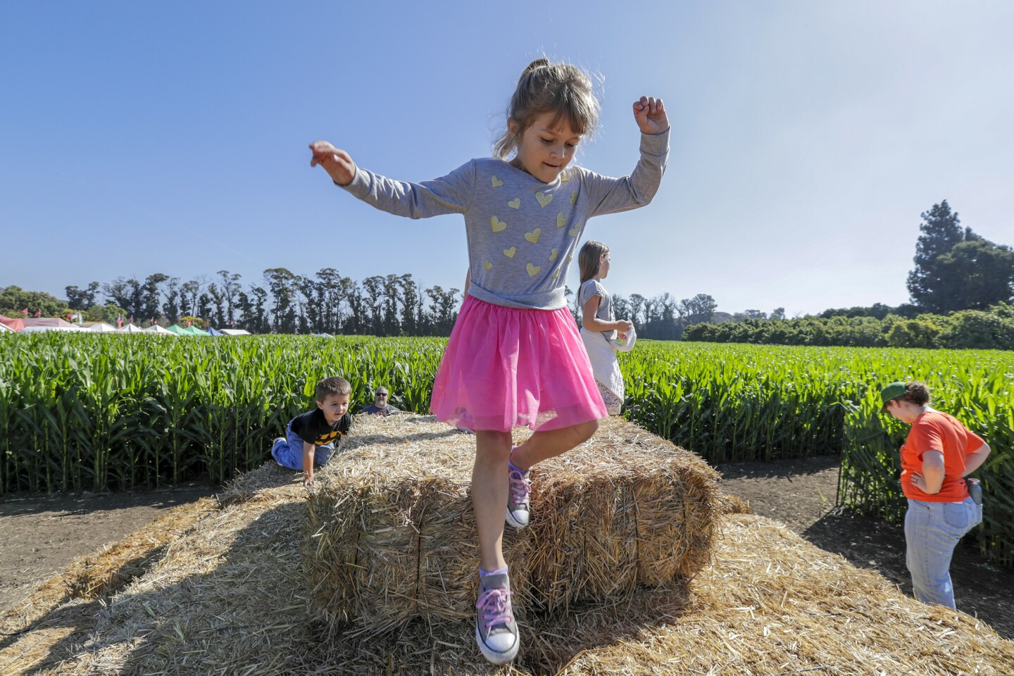 Riece Dinse, 6, plays on hay bales stacked to provide a higher vantage point of a complex maze of corn stalks at Underwood Family Farms in Moorpark.