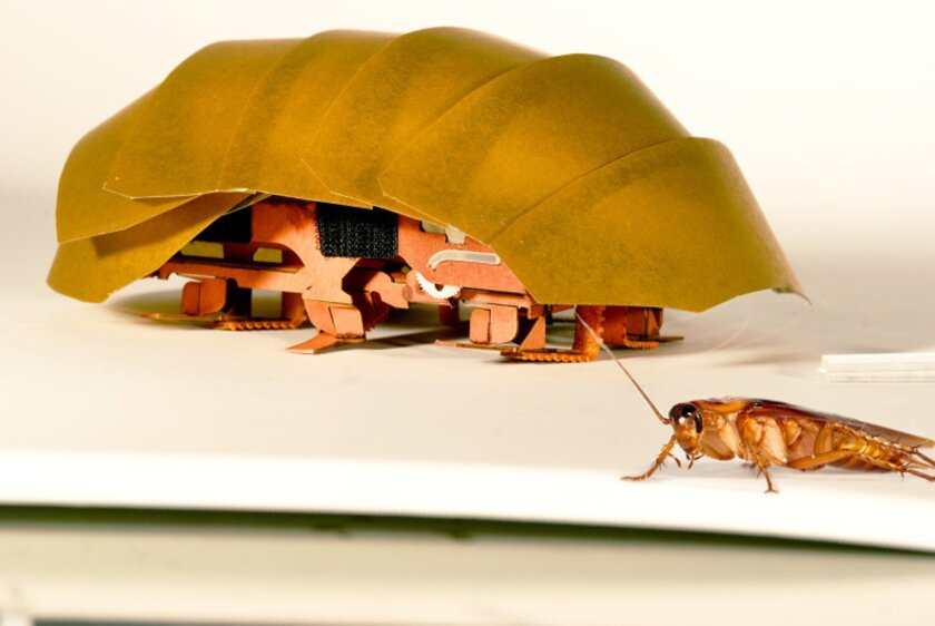 This photo provided by PolyPEDAL Lab UC Berkeley, shows the compressible robot, CRAM with a real cockroach. When buildings collapse in future disasters, the hero helping rescue trapped people may be a cheap robotic roach. Repulsive as they seem, cockroaches have the unusual ability to squish their
