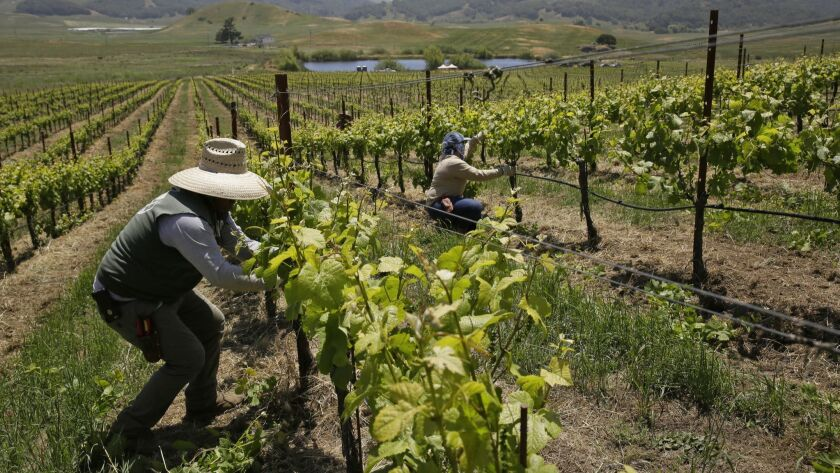 A Coachella Valley labor contractor will have to pay nearly $647,000 to more than 1,300 farm workers for failing to issue final paychecks on time, the state labor commissioner announced Monday.