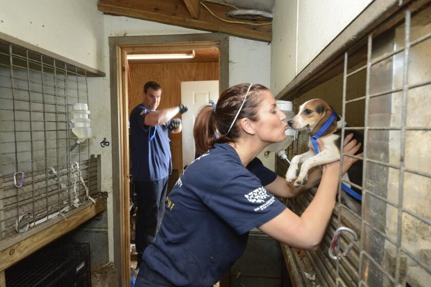 Puppy mill rescue