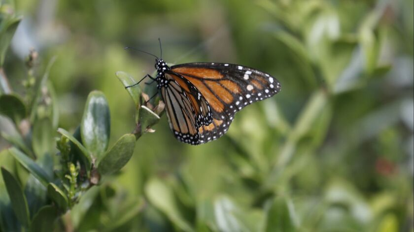 From nightmare backyard to a butterfly haven