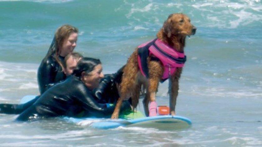 Surf-dog-event-Ricochet-surfing-FI