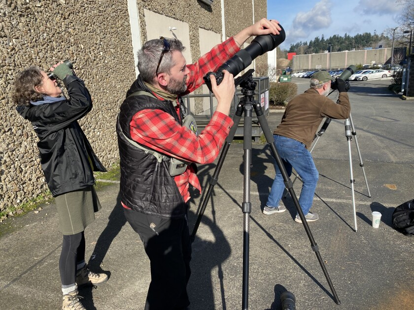 Birder Jeremiah Holt, flanked by Patti Loesche, left, and Ed Deal of Seattle's Urban Raptor Conservancy, adjusts his camera to shoot photos of a peregrine falcon perched high on the wall of a Seattle-area hotel.