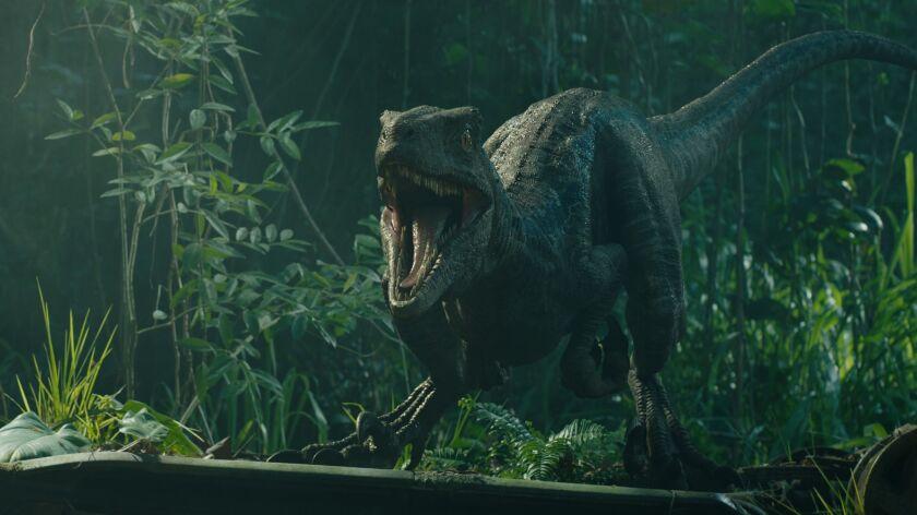 "Velociraptor Blue in ""Jurassic World: Fallen Kingdom."" When the island's dormant volcano begins roar"