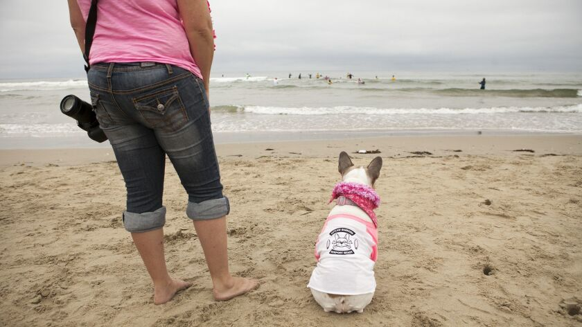 HUNTINGTON BEACH, June 10, 2016 - Amy Nykolayko, with Cherie the Surf Dog, right, out of Newport Be