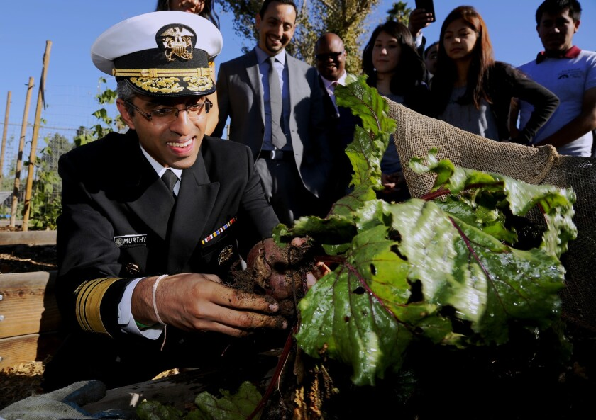 U.S. Surgeon General Vivek H. Murthy pulls beets out of a raised planter in the Fremont High School garden in Los Angeles on Nov. 20, 2015.