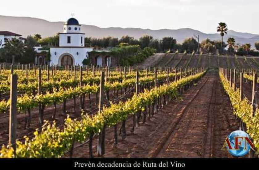 Prevén decadencia de Ruta del Vino