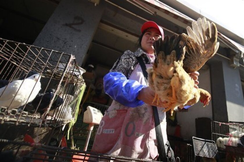 FILE - A vender holds a chicken at a chicken whole sale market in this Tuesday April 2, 2013 file photo in Shanghai, China. Chinese scientists have found the strongest evidence yet that a new bird flu strain is sometimes able to spread from person to person, but they are emphasizing that the virus still does not transmit easily. (AP Photo/ File)