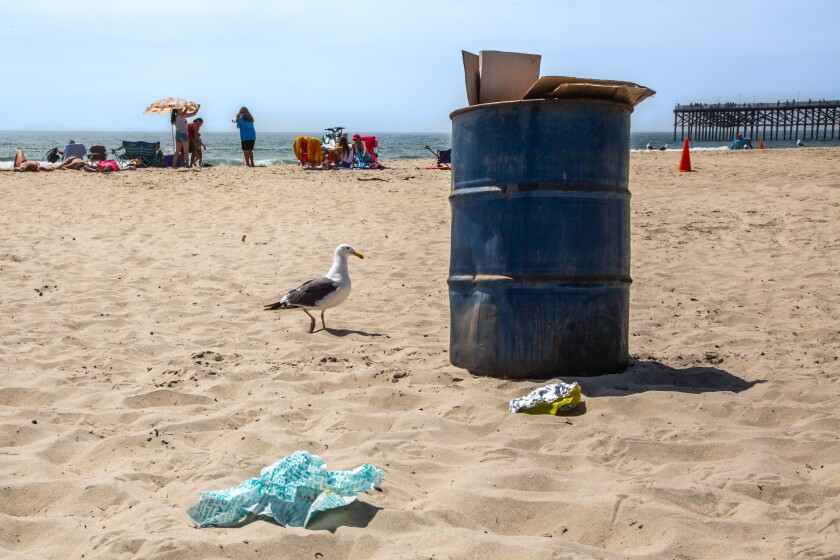 A seagull helps itself to an overflowing trash can in Pacific Beach on Wednesday.