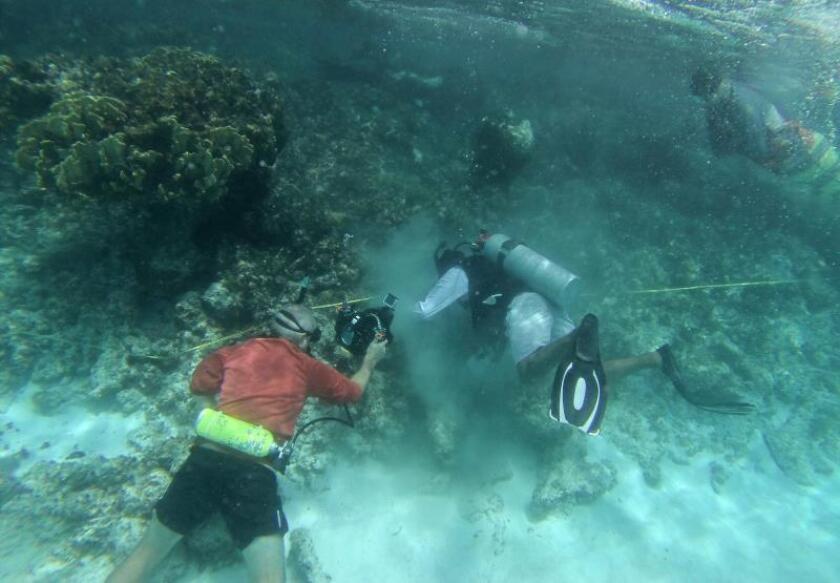 Especialistas participan este viernes en la plantación de 20.000 pies de coral frente a las costas de Cancún y la Riviera Maya, en el caribe mexicano. EFE/ Lourdes Cruz