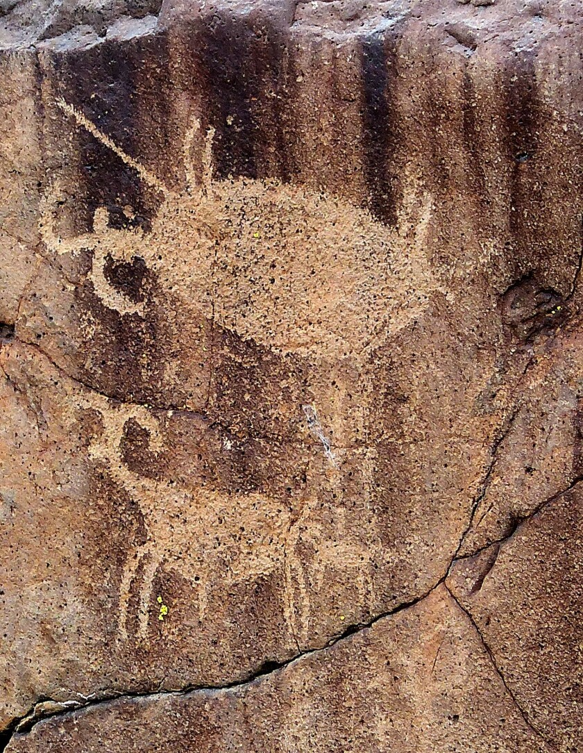 Images in Little Petroglyph Canyon of bighorn sheep.