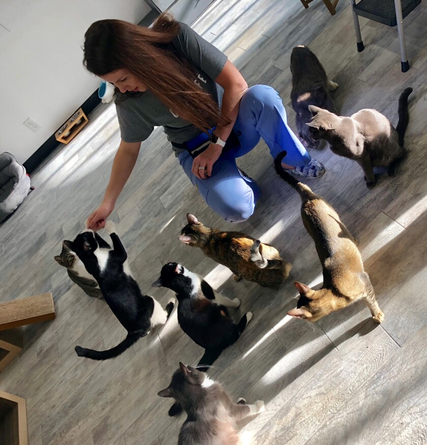 Cristin Tamburo Coll at the CatCafe, where she works on feline behavior.