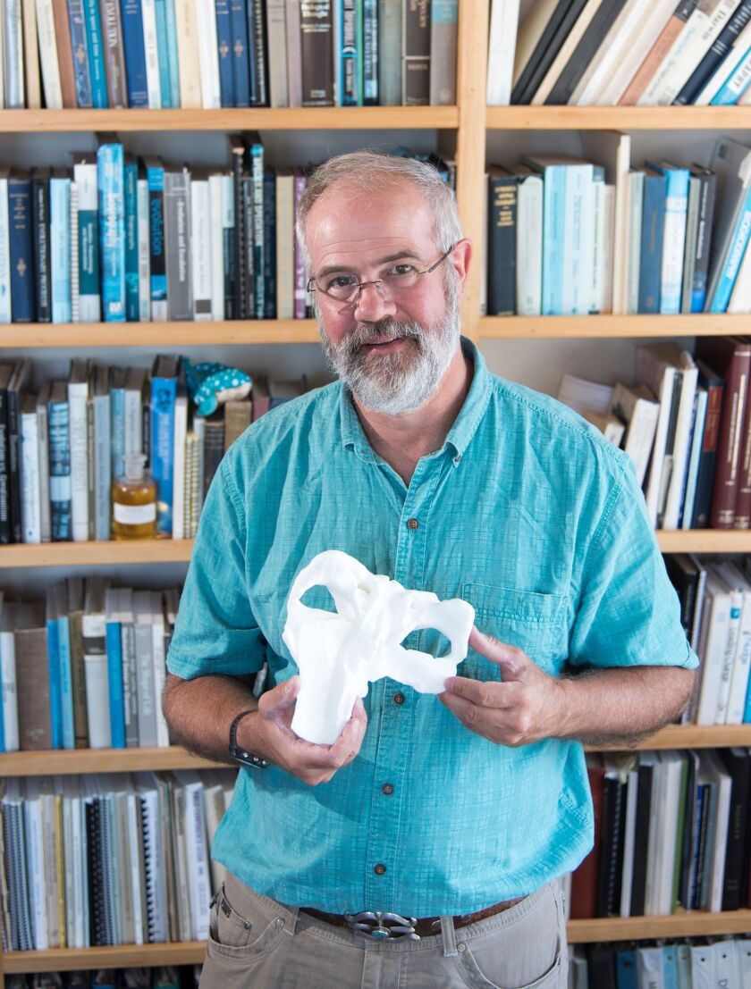 UC San Diego researcher Dick Norris holds a 3-D printed version of a whale scull. One of his former students named the ancient whale after Norris and his father, Kenneth Norris