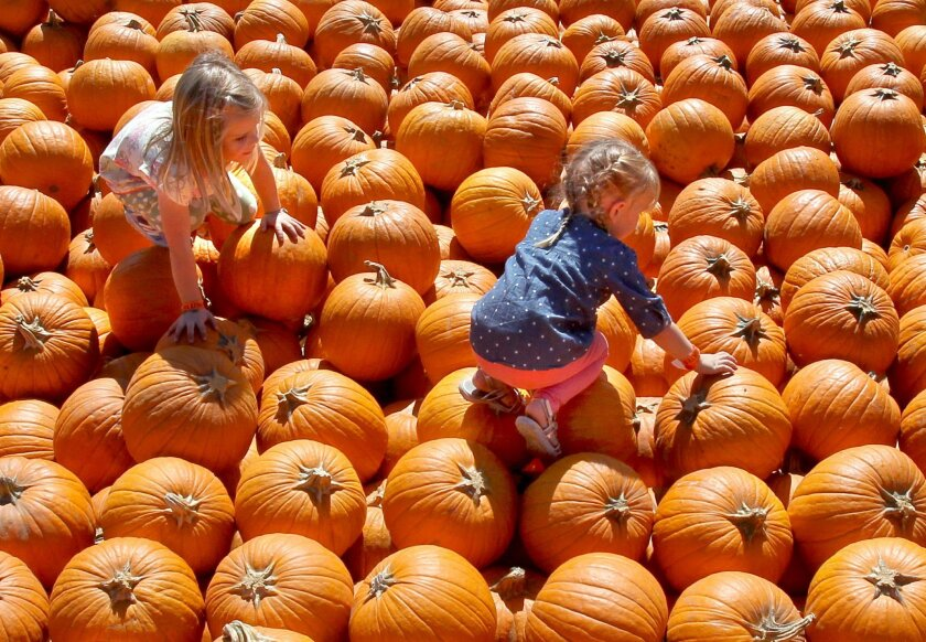Visitors check out the pumpkin patch at Bates Nut Farm last year.