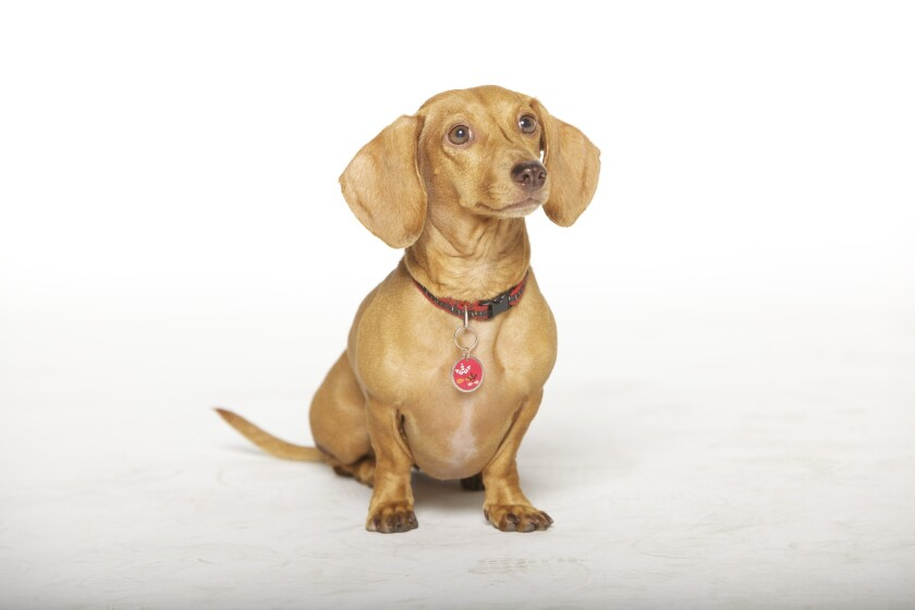 """""""Wiener Dog Nationals,"""" a family comedy by first-time feature director Kevan Peterson, will have its world premiere Saturday at the Island Cinema 7."""