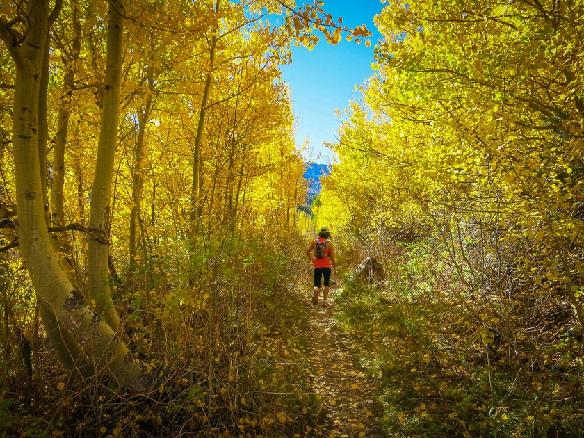 Lose yourself in the burst of gold at McGee Creek Canyon. Colors are blazing right now for a great weekend getaway.
