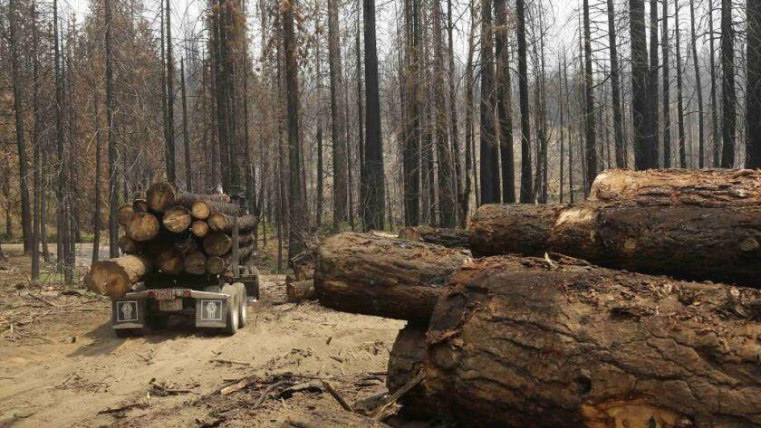 Timeline: California's intense tree mortality follows a
