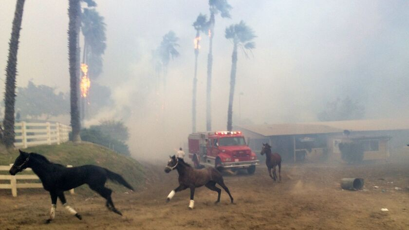 Terrified horses galloped from San Luis Rey Downs as the Lilac Fire sweeped through the horse-traini