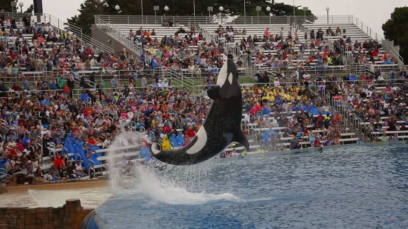 SeaWorld San Diego last year unveiled its new Orca Encounter, which replaced the more theatrical Shamu shows that were phased out in San Diego.