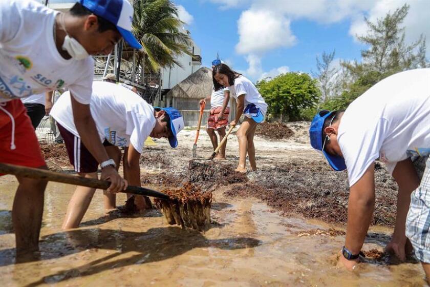Fotografía del 8 de agosto de 2018, que muestra a estudiantes limpiando el sargazo de una playa, en el municipio de Benito Juárez en el estado de Quintana Roo (México). EFE