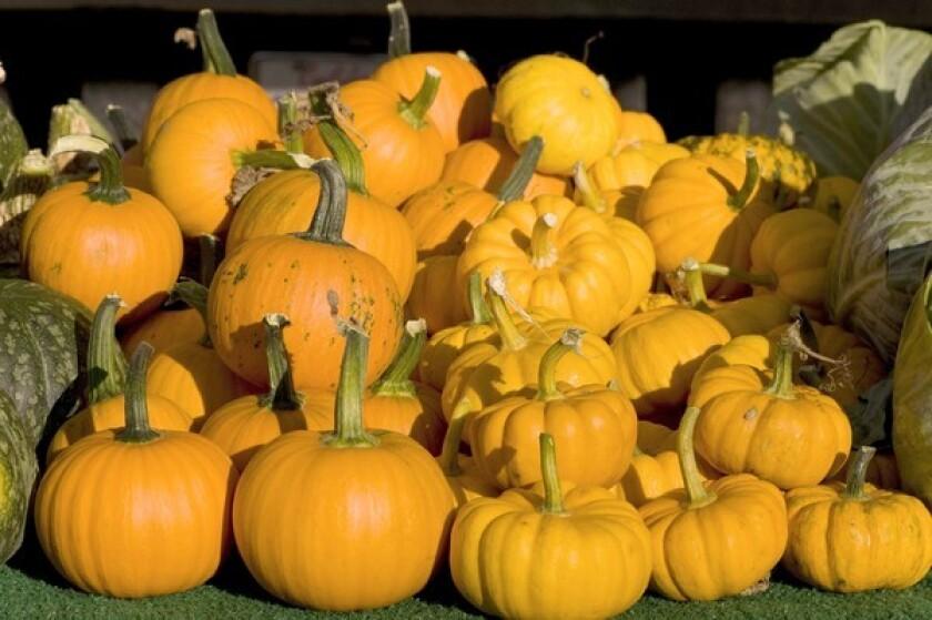 Pumpkins grown by Smith Farms in Orange County, at the Santa Monica Sunday (Main Street) farmers market.
