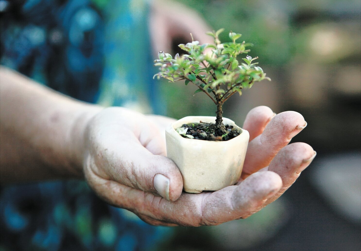 Thinking Small Is Big In The World Of Bonsai The San Diego Union Tribune