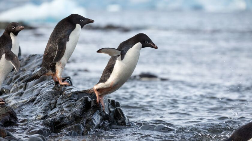 "A scene from the Disneynature film ""Penguins."""