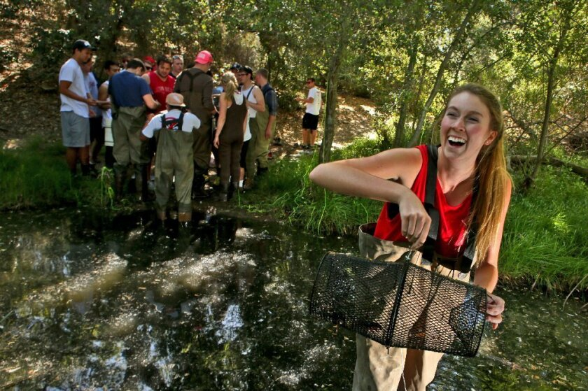 Volunteer Whitney Hagstrom, 22, pulls a crayfish trap from Medea Creek in the Santa Monica mountains.
