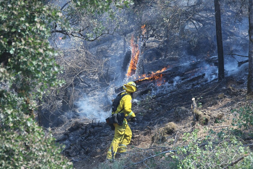 Cal Fire fighter works on putting out hot spot while battling the Mountain fire in Shasta County.
