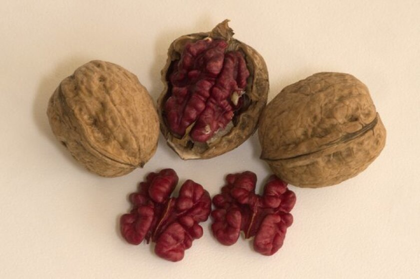 Robert Livermore red walnuts grown by Sanguinetti Farms in Linden.