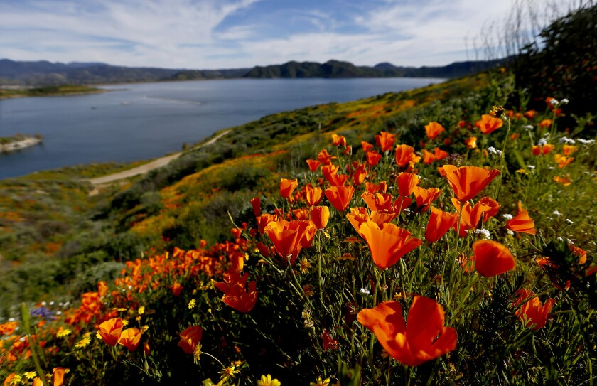 Yes, you still have time to see the super bloom — if you