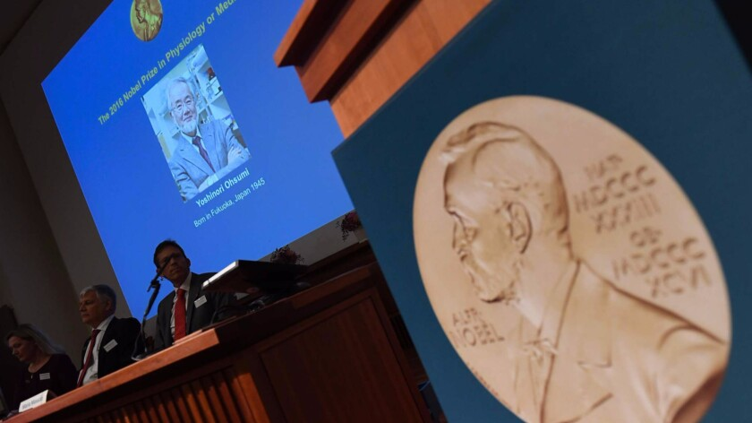 A portrait of Yoshinori Ohsumi, the 2016 winner of Nobel Prize in medicine, is displayed as the award is announced in Stockholm.