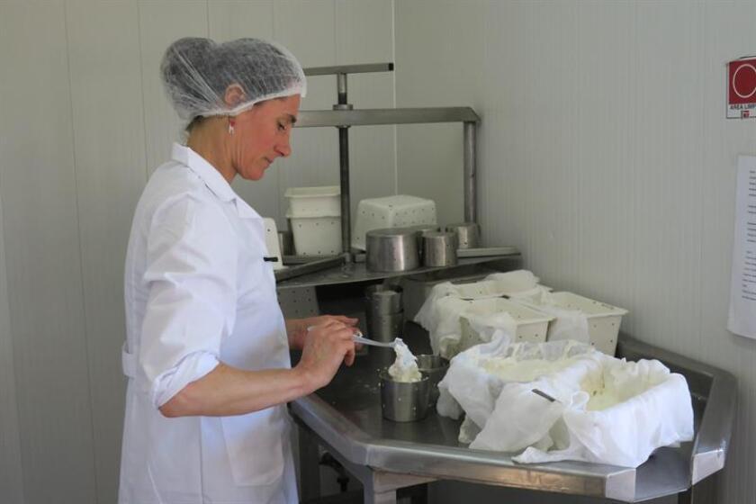 La pastora alemana Katrin Runge prepara mantequilla este lunes 17 de diciembre de 2018, en la granja de cabras en la que se estableció hace 25 años en la sureña comuna de Purranque (Chile). EFE/Archivo
