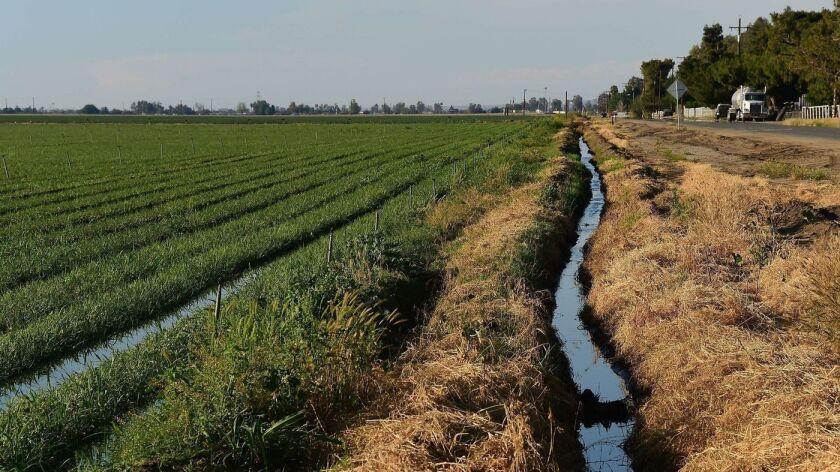 Una cosecha de cebolla crece en el condado de Kent, cerca de donde la sección oeste del Acueducto de California inicia su ascenso hacia Castaic y Pyramid Lakes en el condado de Los Ángeles