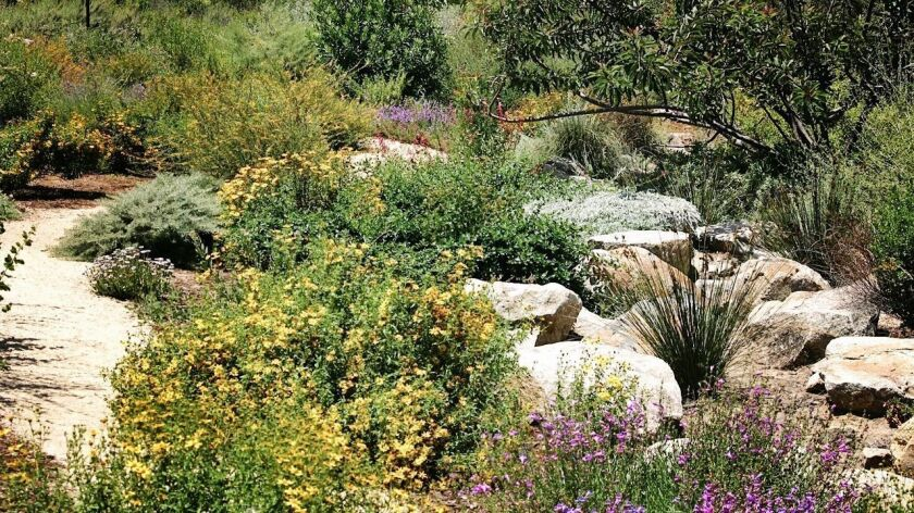 This garden's tapestry of native plants is one of 17 residential gardens in North County on this year's tour sponsored by the San Diego chapter of the California Native Plant Society.