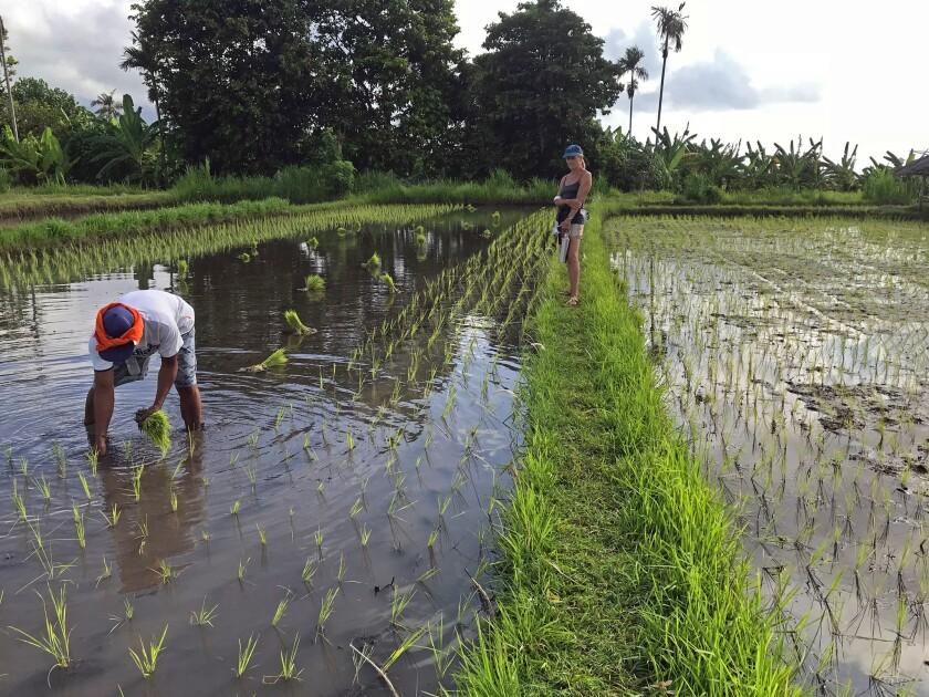 Keeping Bali clean