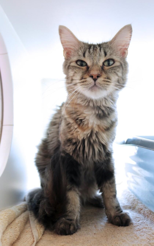 Pet for adoption