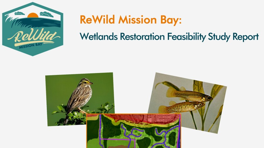 The ReWild Mission Bay Wetlands Restoration Feasibility Study can be viewed or downloaded at rewildmissionbay.org/resources/