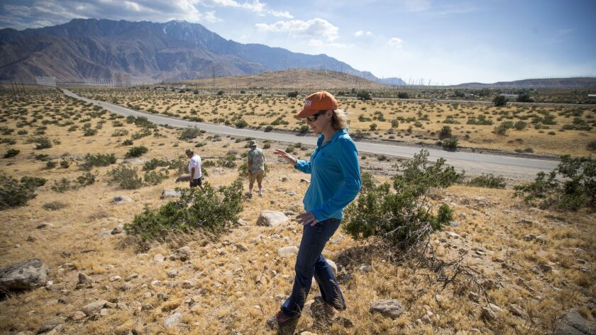 Geologist Kate Scharer walks directly on the San Andreas fault during a tour in the Coachella Valley